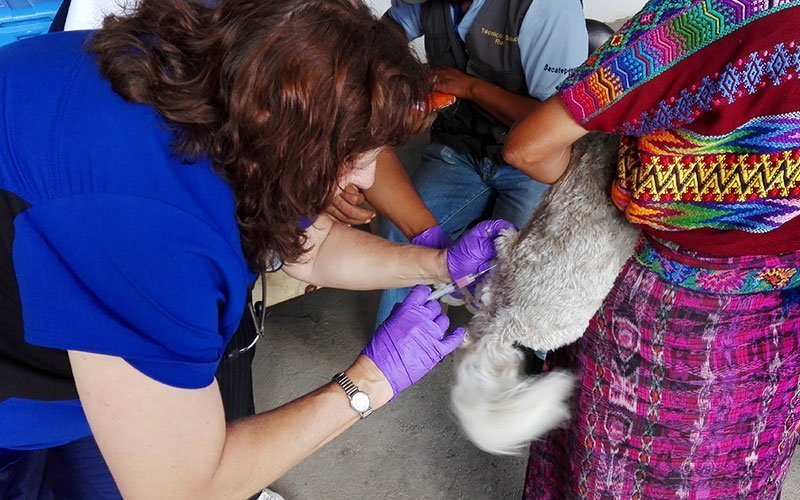 Veterinary Internships in Guatemala