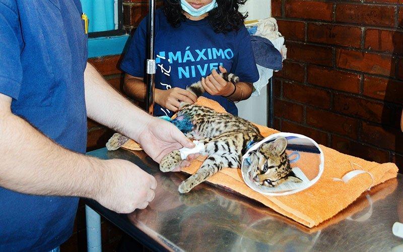 International Internships for Veterinary & Animal Science Major
