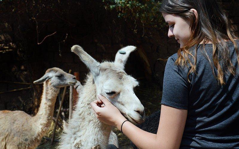 Semester Abroad for Veterinary & Animal Science Major