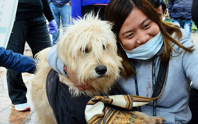 Volunteer at Dogs and Cats Shelters Abroad