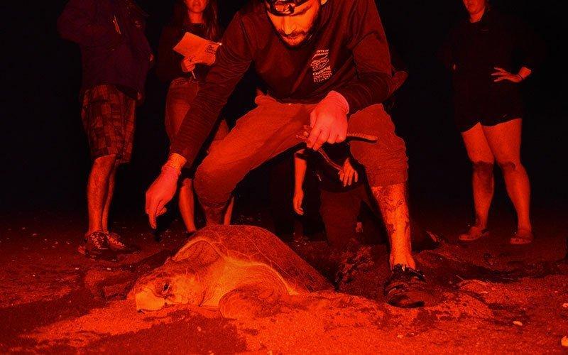 Volunteer in Sea Turtle Conservation